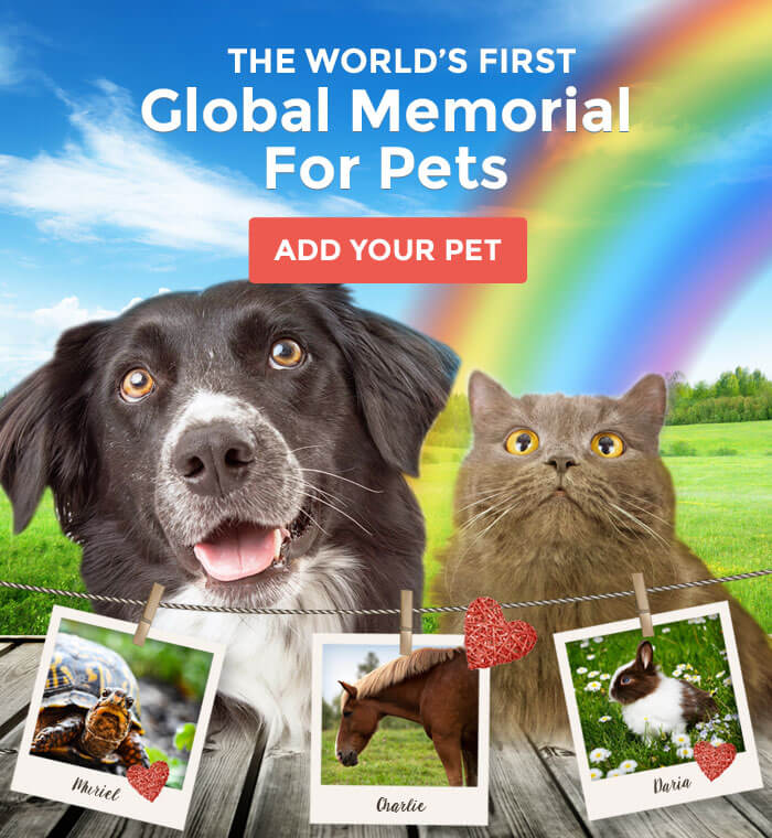 The World's First Global Memorial For Pets, Add Your Pet