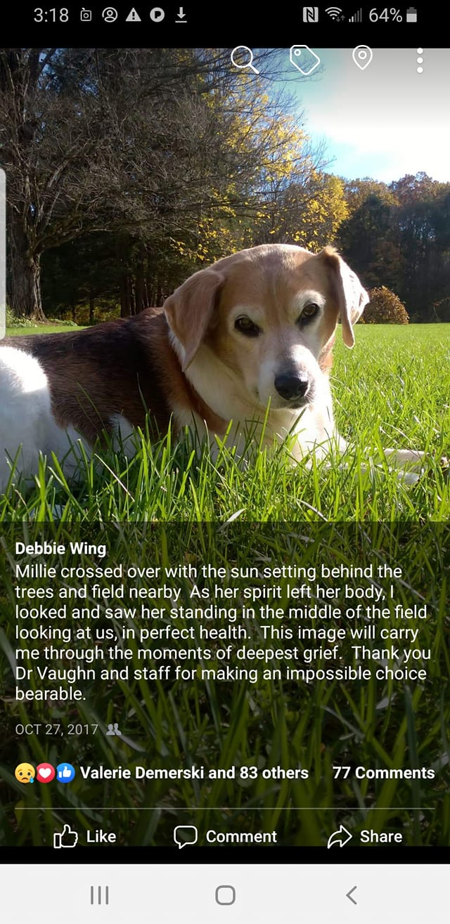Moments After Her Death, Beagle Reappears to Say Goodbye       . 6