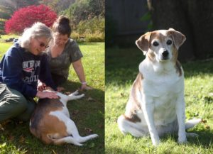 Pets who visited their families after death