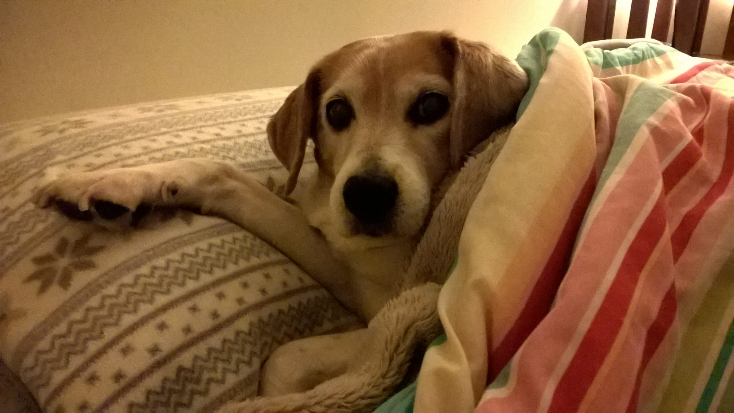 Moments After Her Death, Beagle Reappears to Say Goodbye       . 1