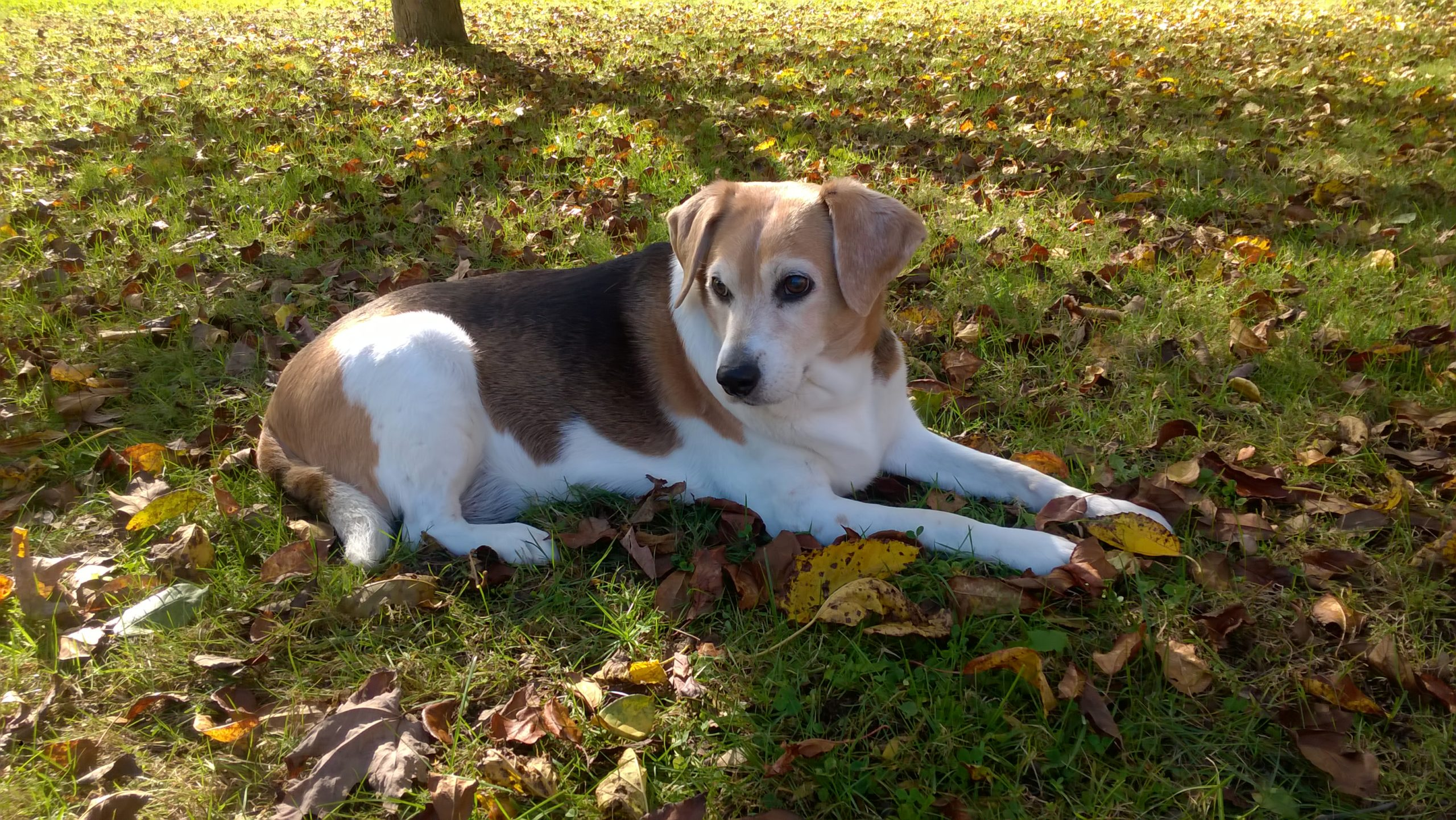 Moments After Her Death, Beagle Reappears to Say Goodbye       . 5